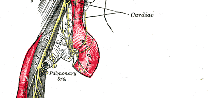 Vagus Nerve Infection?