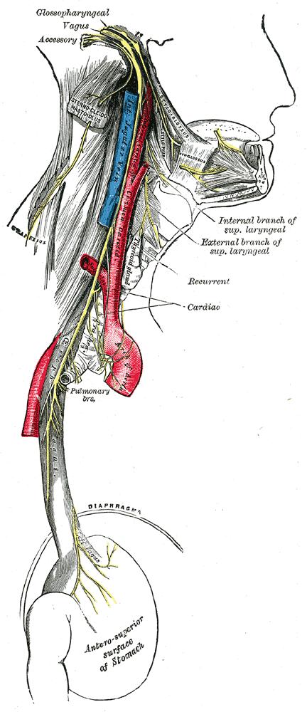 Vagus Nerve Infection